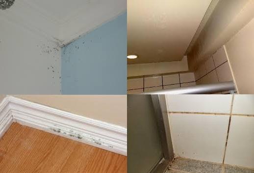 A imagem ilustra a presença de manchas de mofo e/ou fungos em peças da casa